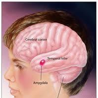 asperger's cure asperger's treatments